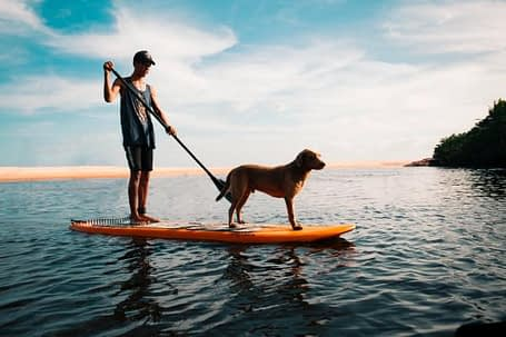 dogs on paddle board